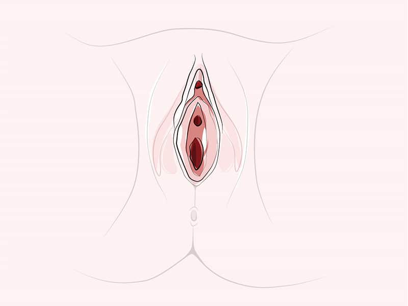 clitoris anatomy facts